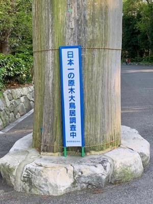 日本一の原木大鳥居調査中
